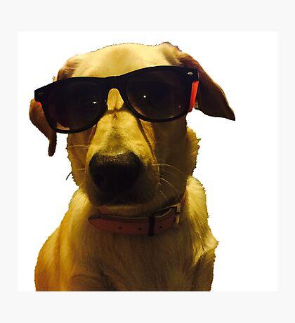 Koda the dog with sunglasses Photographic Print