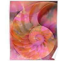 Colorful Nautilus Shell By Sharon Cummings Poster