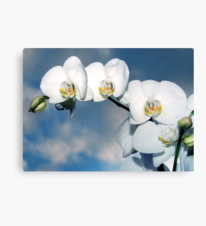 Innocence - Orchid Flower Canvas Print