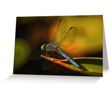 Dragonfly in Kaleidiscope Greeting Card