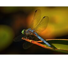 Dragonfly in Kaleidiscope Photographic Print