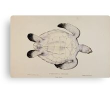 Tortoises terrapins and turtles drawn from life by James de Carle Sowerby and Edward Lear 060 Canvas Print
