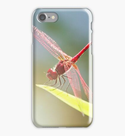 Red Dragonfly iPhone Case/Skin