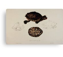 Tortoises terrapins and turtles drawn from life by James de Carle Sowerby and Edward Lear 046 Canvas Print