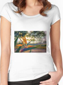 Backlit Bird of Paradise  Women's Fitted Scoop T-Shirt