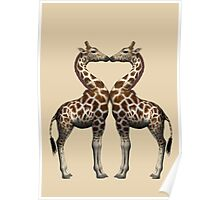Giraffes In Love Poster