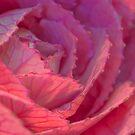 Ornamental pink by peaky40