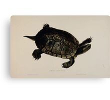 Tortoises terrapins and turtles drawn from life by James de Carle Sowerby and Edward Lear 043 Canvas Print