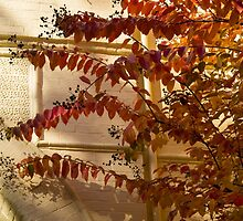Dainty Branches - Warm Fall Colors - Washington, DC Facades by Georgia Mizuleva