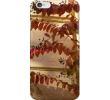 Dainty Branches - Warm Fall Colors - Washington, DC Facades iPhone Case/Skin