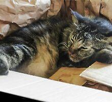 Cat In The Box!  by heatherfriedman