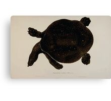Tortoises terrapins and turtles drawn from life by James de Carle Sowerby and Edward Lear 016 Canvas Print