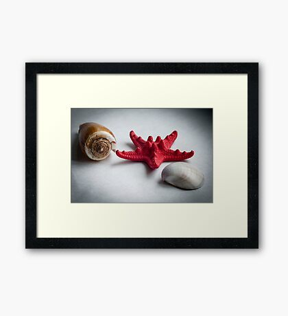 A sea snail shell, red starfish and white clam Framed Print