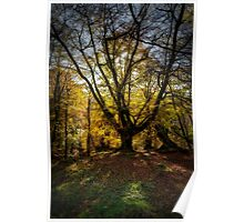 Autumn colours in the forest Poster