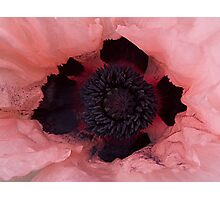 Poppy Crown Photographic Print