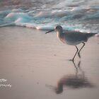 Early Bird by Sandy Woolard