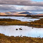 Great light on Rannoch Moor, Scotland by Cliff Williams