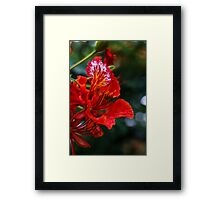 Soft Joy Framed Print
