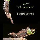 Unicorn moth caterpillar poster by DigitallyStill
