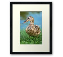 Lady Mallard Framed Print