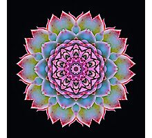 Cactus Kaleidoscope Photographic Print