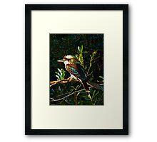 Laughing Kookaburra Framed Print