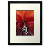 Cactus Flower. Framed Print