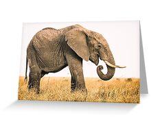 Happy Elephant - Masai Mara, Kenya Greeting Card