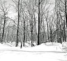 Snowblind by MotherNature2