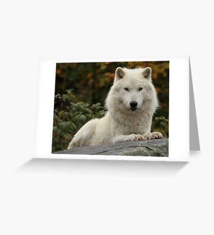 Prince of the forest Greeting Card