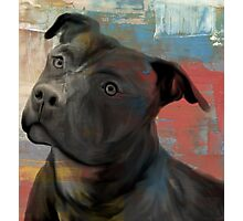 Pit Bull Piglet in Paint Photographic Print