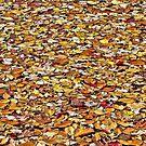 Leaf Peeping by Lanis Rossi