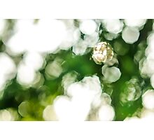Crystal Life Photographic Print