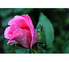 """""""Rose Of Hope"""" Photographic Print"""