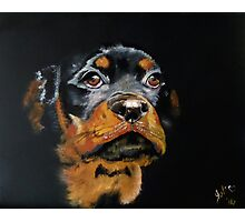 Rascal the Rottweiler Pup Photographic Print