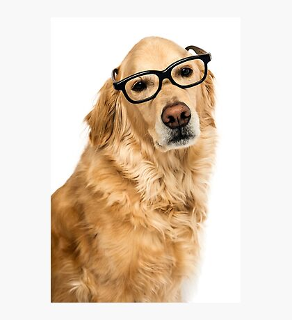 Golden Retriever with glasses Photographic Print