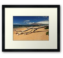 A Branch On Keawakapu Beach Framed Print