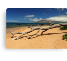 A Branch On Keawakapu Beach Canvas Print