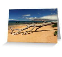 A Branch On Keawakapu Beach Greeting Card