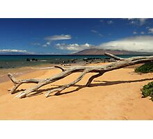 A Branch On Keawakapu Beach Photographic Print