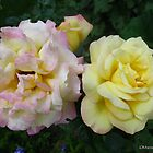 Rose duo by MarianBendeth