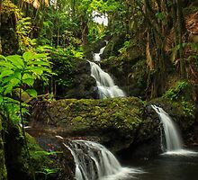 Onomea Falls by James Eddy