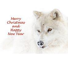Christmas Arctic wolf Photographic Print