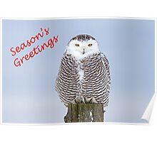 Christmas Snowy owl Poster
