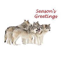 Christmas Wolf Pack Photographic Print