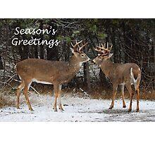 Season's Greetings deer Photographic Print