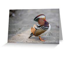 Closeup male mandarin duck on the ground Greeting Card