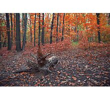 Autumn. Fall. Autumnal Park. Autumn Trees and Leaves Photographic Print