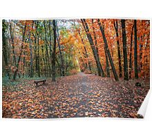 Autumn. Fall. Autumnal Park. Autumn Trees and Leaves Poster