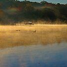 Morning Fog II by Eileen McVey